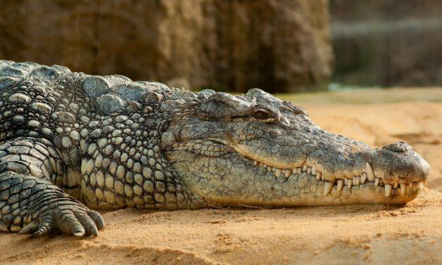 Pozycje jogi: makarasana (krokodyl) ~Monika Klisch