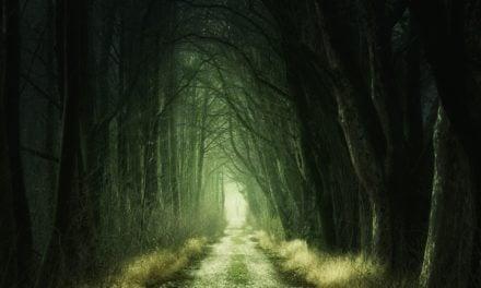 Uwolnić się od strachu – na drodze do nieustraszoności. Joanna Géhin