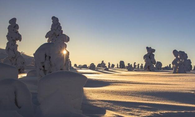 Zimą doceń swoją kaphę ~ Marta Lebre